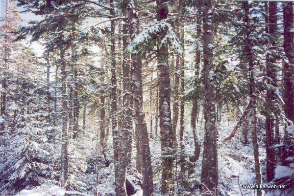 The snow-covered spruce and fir forest is a nice and serene place to hike.