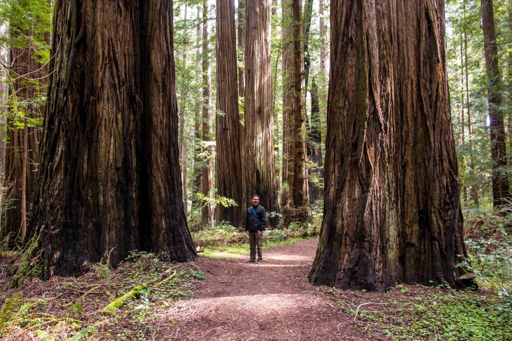 A Weekend in the Redwoods | Hike Then Wine