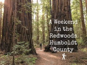 A Weekend in the Redwoods - Humboldt County | Hike Then Wine