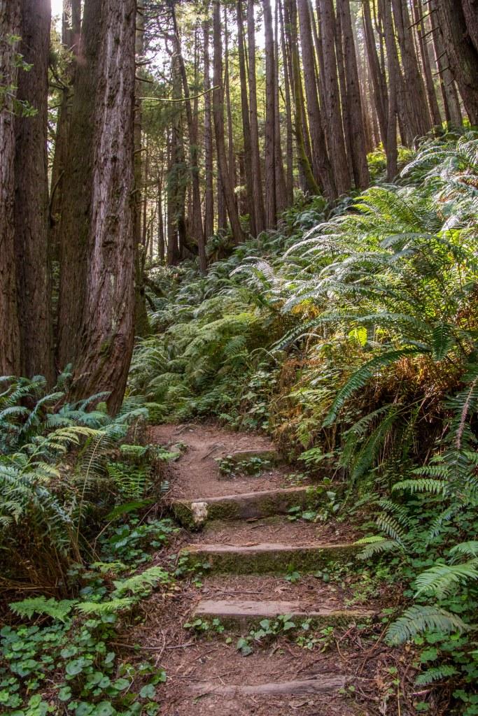 Stillwater Cove a Hidden Gem Along the Sonoma Coast | Hike Then Wine