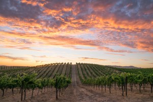 A Sunset to Remember – Sonoma Valley