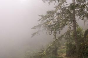 Sky Trail - Point Reyes National Seashore | Hike Then Wine