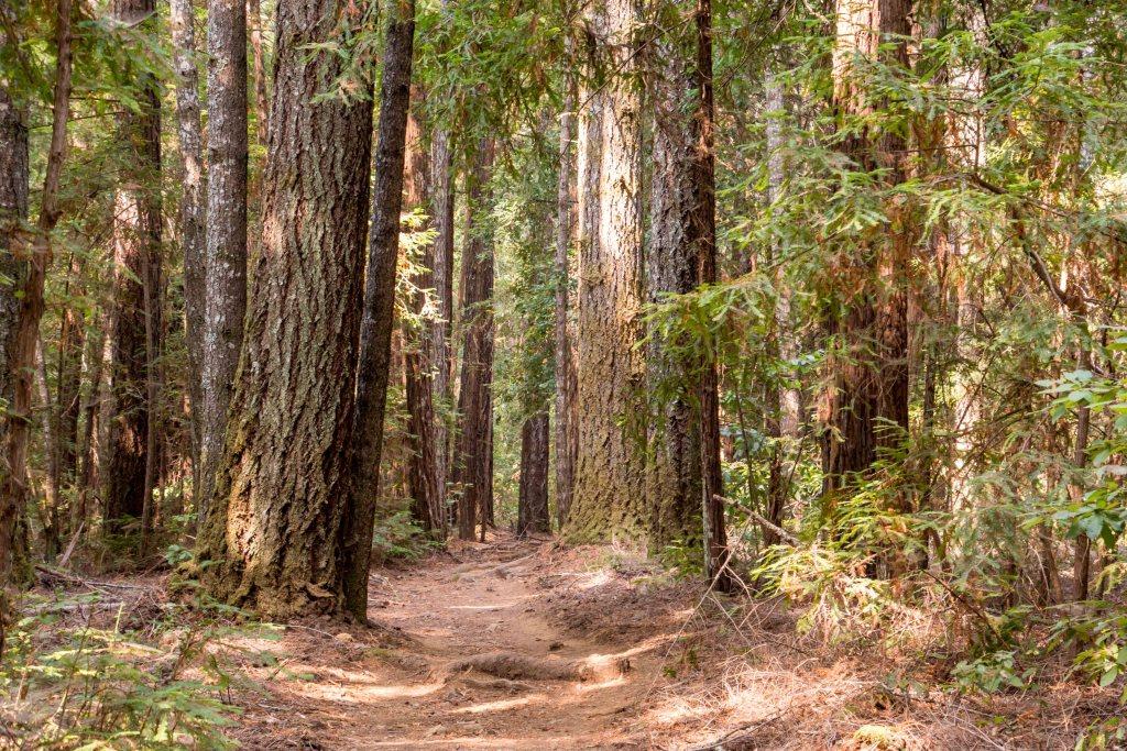 Henry Cowell Fall Creek 1st Attempt - Santa Cruz | Hike Then Wine