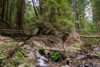 Henry Cowell Fall Creek 1st Attempt - Santa Cruz | Hike Then Wine