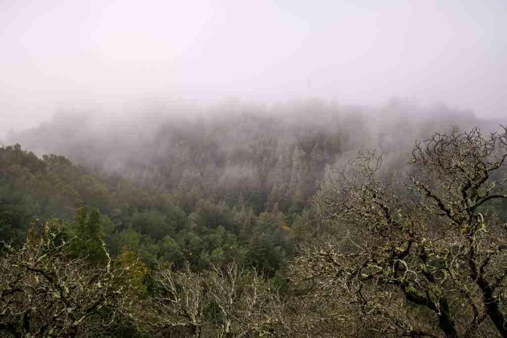 Fall Foliage at Phoenix Lake - Marin   Hike Then Wine