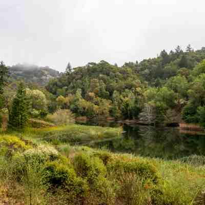 Fall Colors at Phoenix Lake – Marin