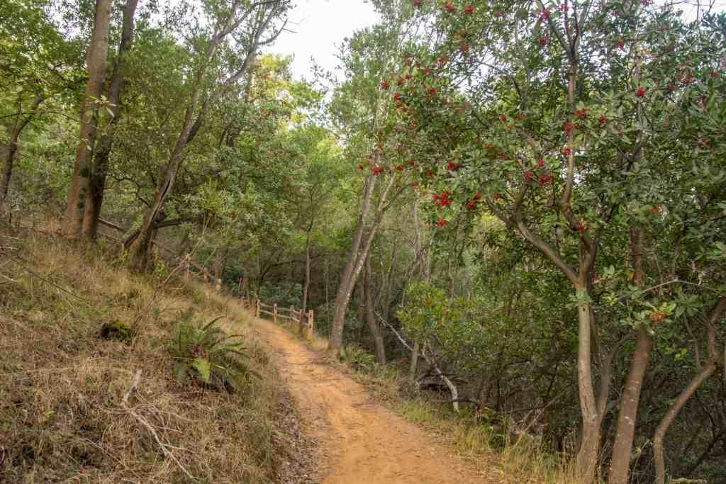 Sunrise Hike at China Camp - Marin | Hike Then Wine