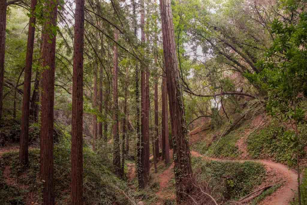 Joaquin Miller Park - Oakland   Hike Then Wine