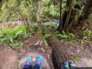Russian Gulch Waterfall Hike and Salmon Spawning! - Mendocino