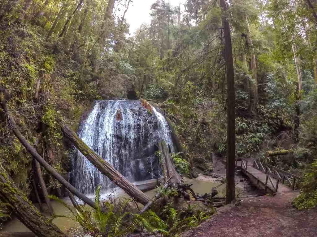 Russian Gulch Waterfall Hike and Salmon Spawning! - Mendocino