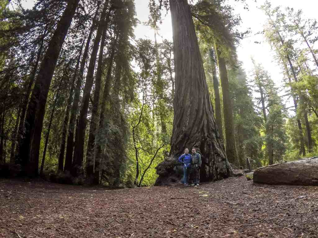 Sloshing Our Way Thru the Forest of Giants to Sempervirens Falls - Big Basin Redwood SP   Hike Then Wine
