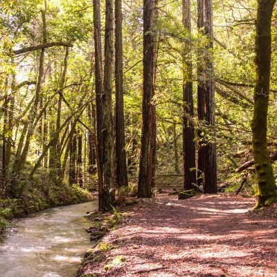 King Mountain Preserve to Dawn Falls – Marin