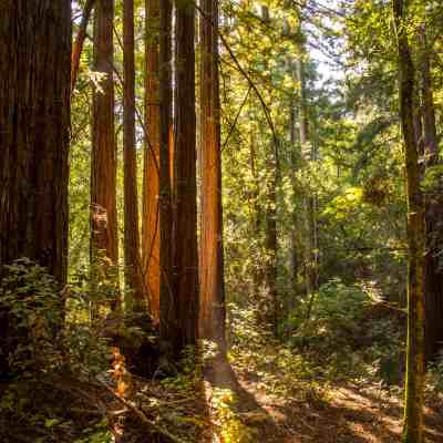 Sonoma Ridge Trail – Jack London SHP