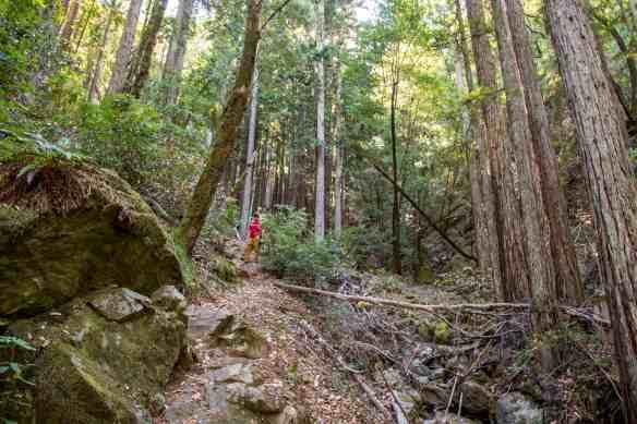 Going Wide Around Lake Lagunitas - Marin | Hike Then Wine