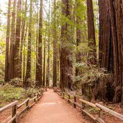 A Stroll Through Muir Woods – Marin County