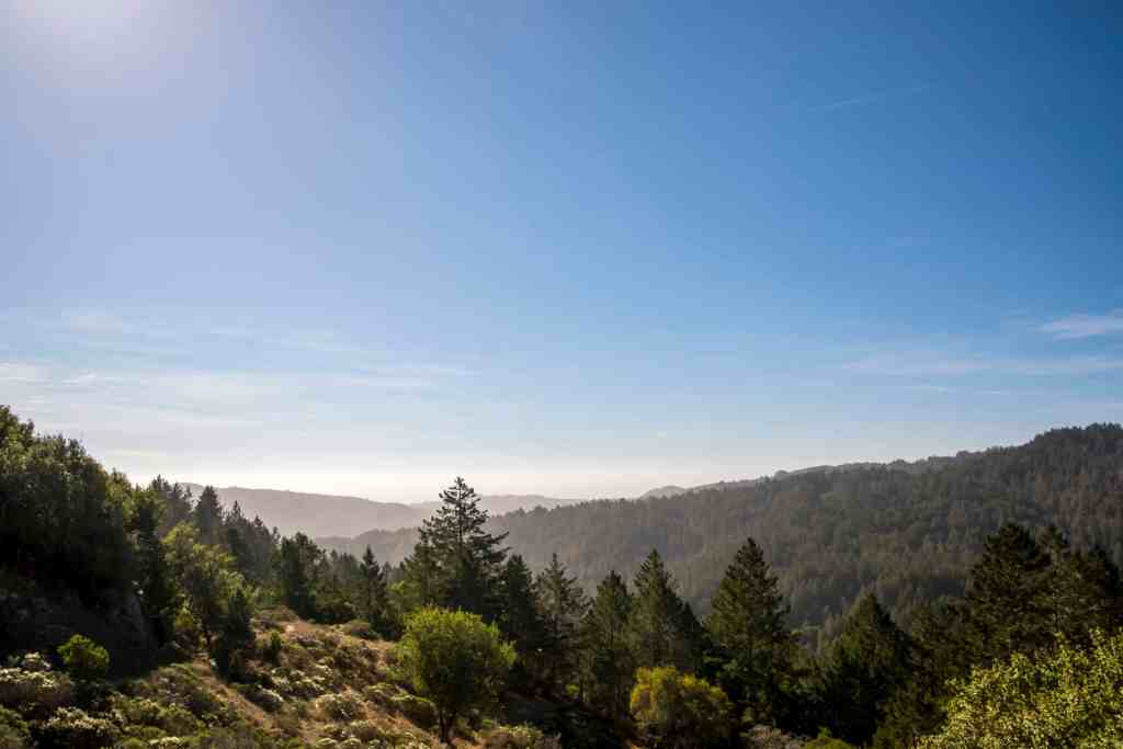 A Stroll Through Muir Woods - Marin County | Hike Then Wine