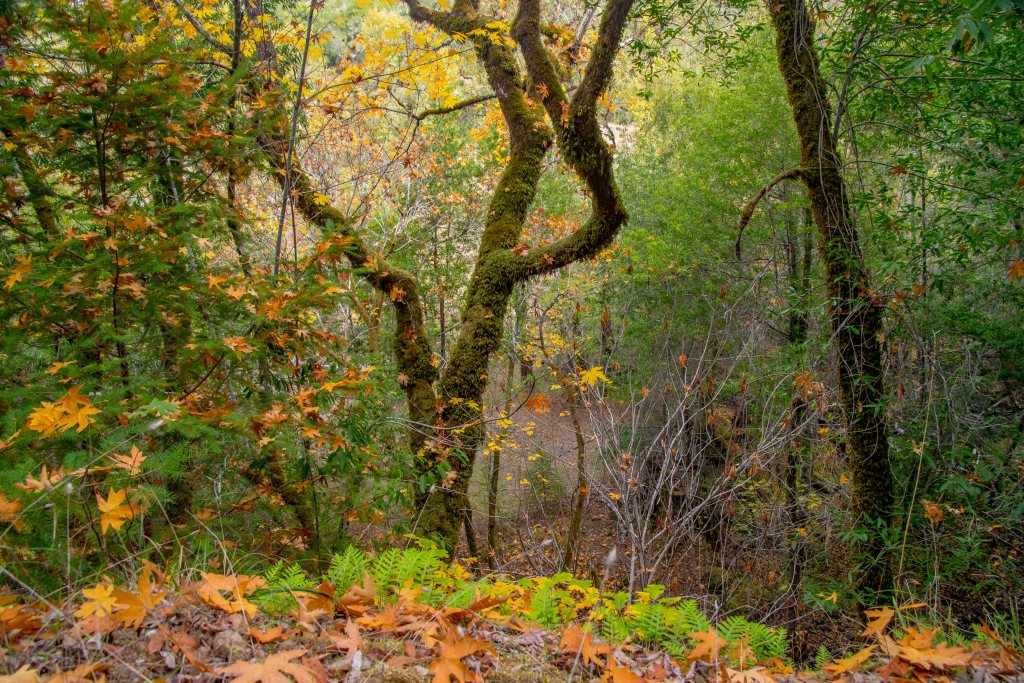 Fall Adventures in Austin Creek SRA - Sonoma County | Hike Then Wine