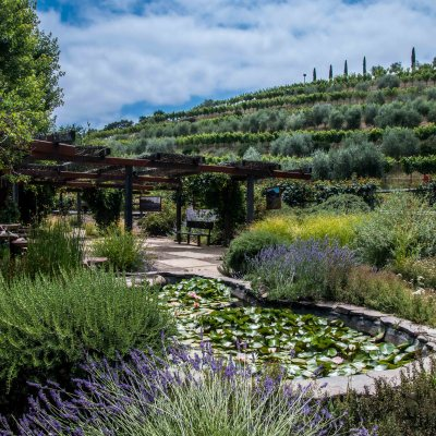 Benziger Winery – Amazing Sonoma Valley Experience!
