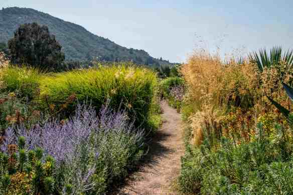 Benziger Winery - Amazing Sonoma Valley Experience! | Hike Then Wine