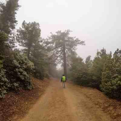 Misty Mt St Helena – Napa