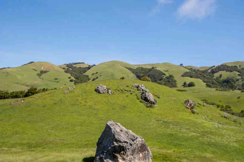 Wildflowers and Green Hills in Lucas Valley – Marin | Hike Then Wine