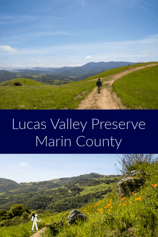 Wildflowers and Green Hills in Lucas Valley – Marin   Hike Then Wine