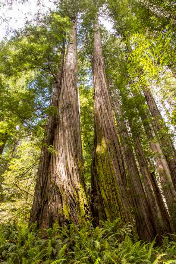 Jedediah Smith Redwoods State Park - Del Norte County | Hike Then Wine