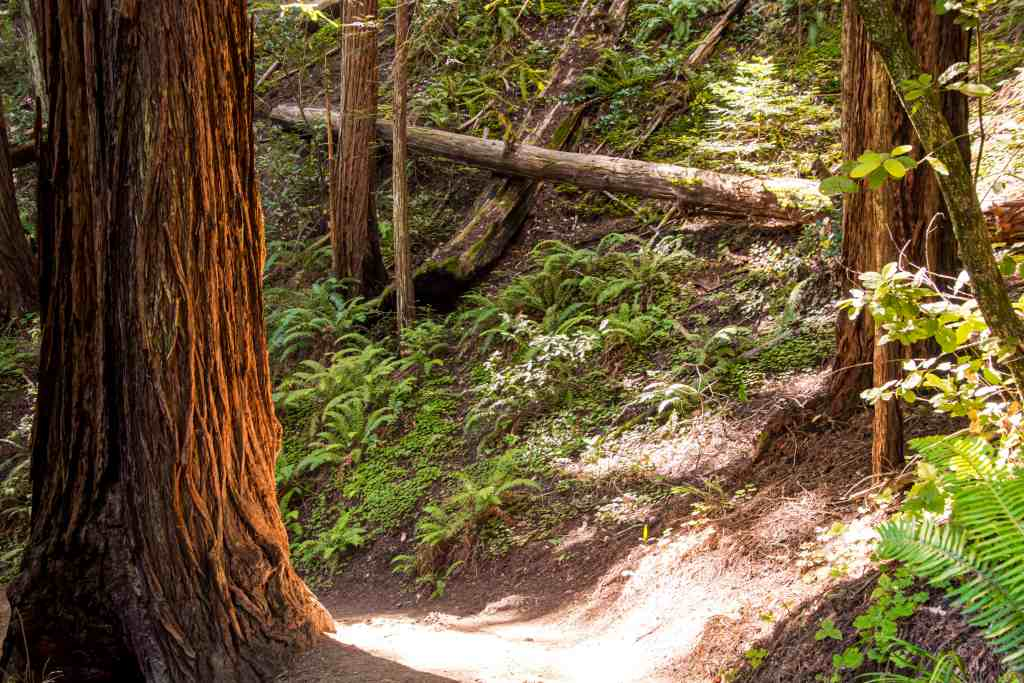 Kick-Your-Bootyjack Trail to Muir Woods - Marin | Hike Then wine