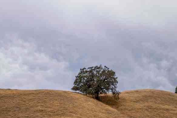 Jack London State Park Summit! - Sonoma County | Hike Then Wine