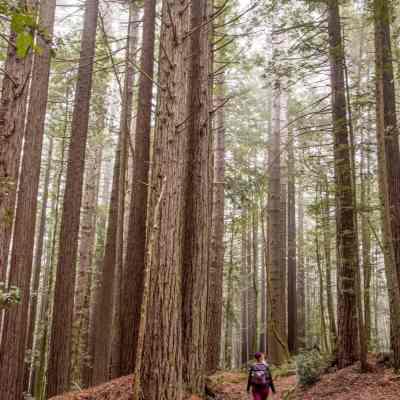 Mendocino Woodlands – Mendocino County