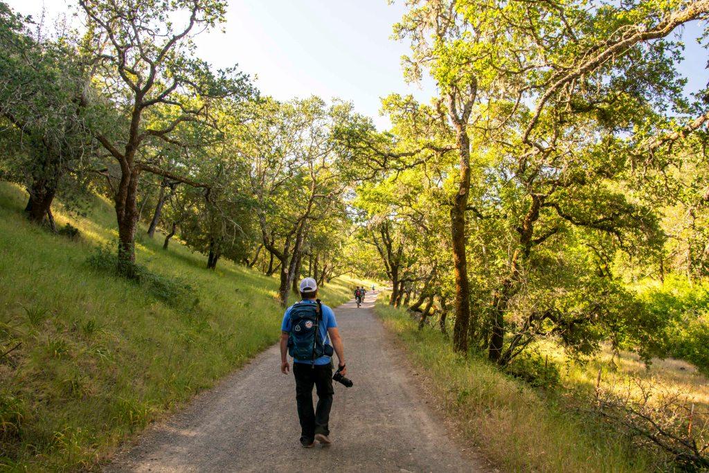 hiking in oak woodlands