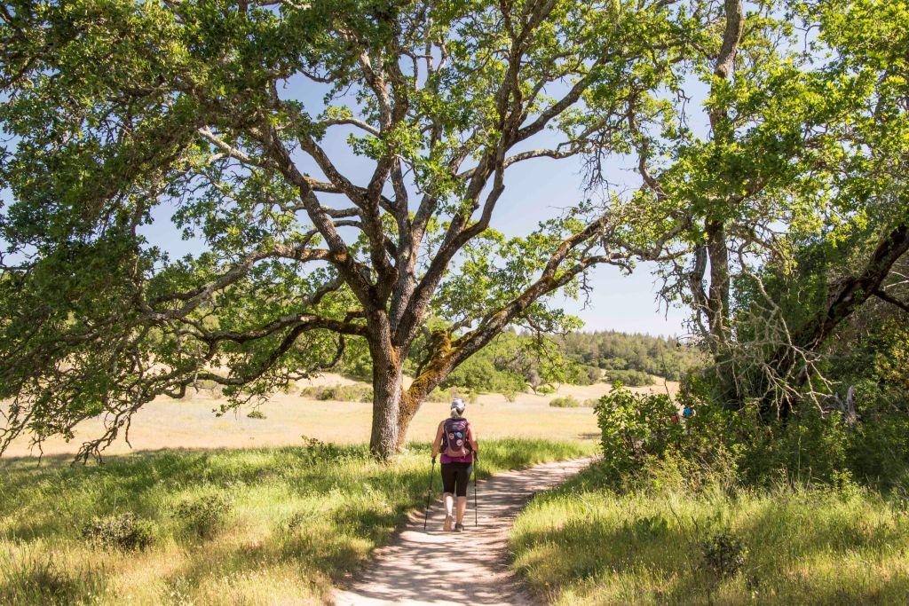 hiking next to a big oak