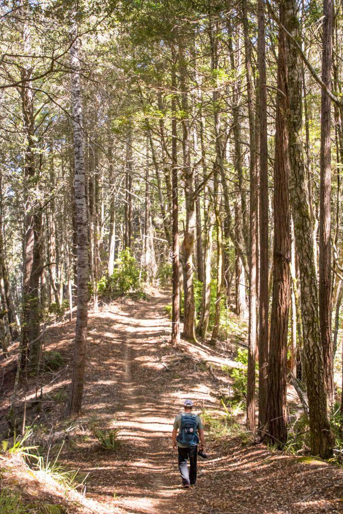 rob hiking the ridge trail mendocino woodlands