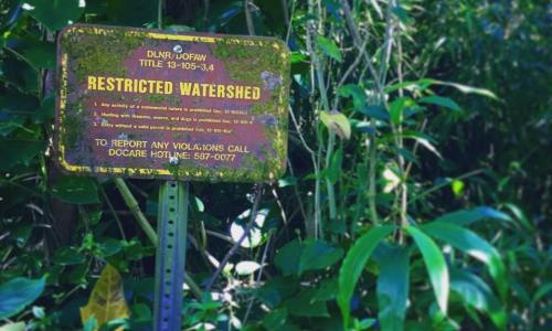 It's Mostly Legal: Hiking Lulumahu Falls