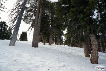 Trail & Snow Conditions: Icehouse Canyon, Bighorn Peak, & Cucamonga Peak, January 16 2016