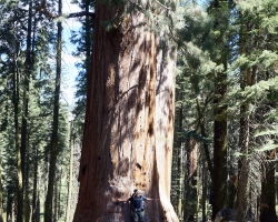 Gil meets his first Sequoia