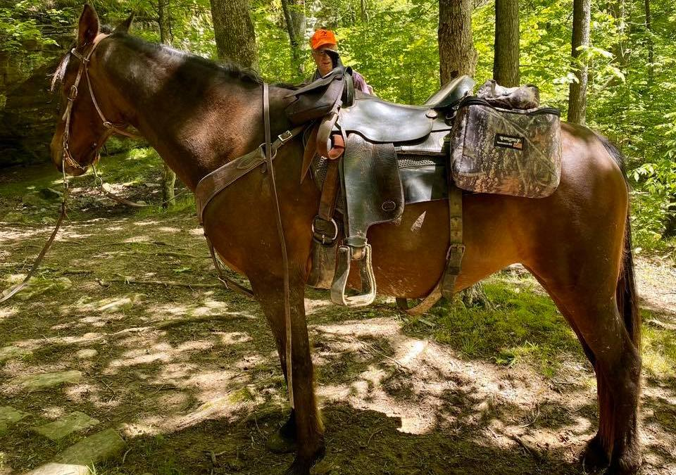 Hiking with Shawn's Shawnee Safety Guide Series: Safely Sharing the Trail with Equestrian Users