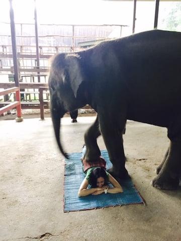 タイ、象に踏まれる