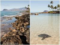 Koolina Paradise Cove | Hawaii Family Activities  Fun ...
