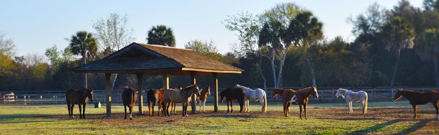 seabrook-island-equestrian-center03