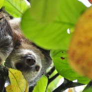 I find your sloth very motivating