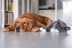 cbd for pets | cbd oil for dogs | hemp dog treats