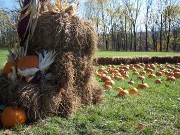 Hill Hold Pumpkin Festival