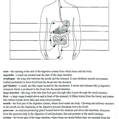 4th Grade Digestive System Diagram Saturn Sl2 Wiring Mckenna Mrs Home Page