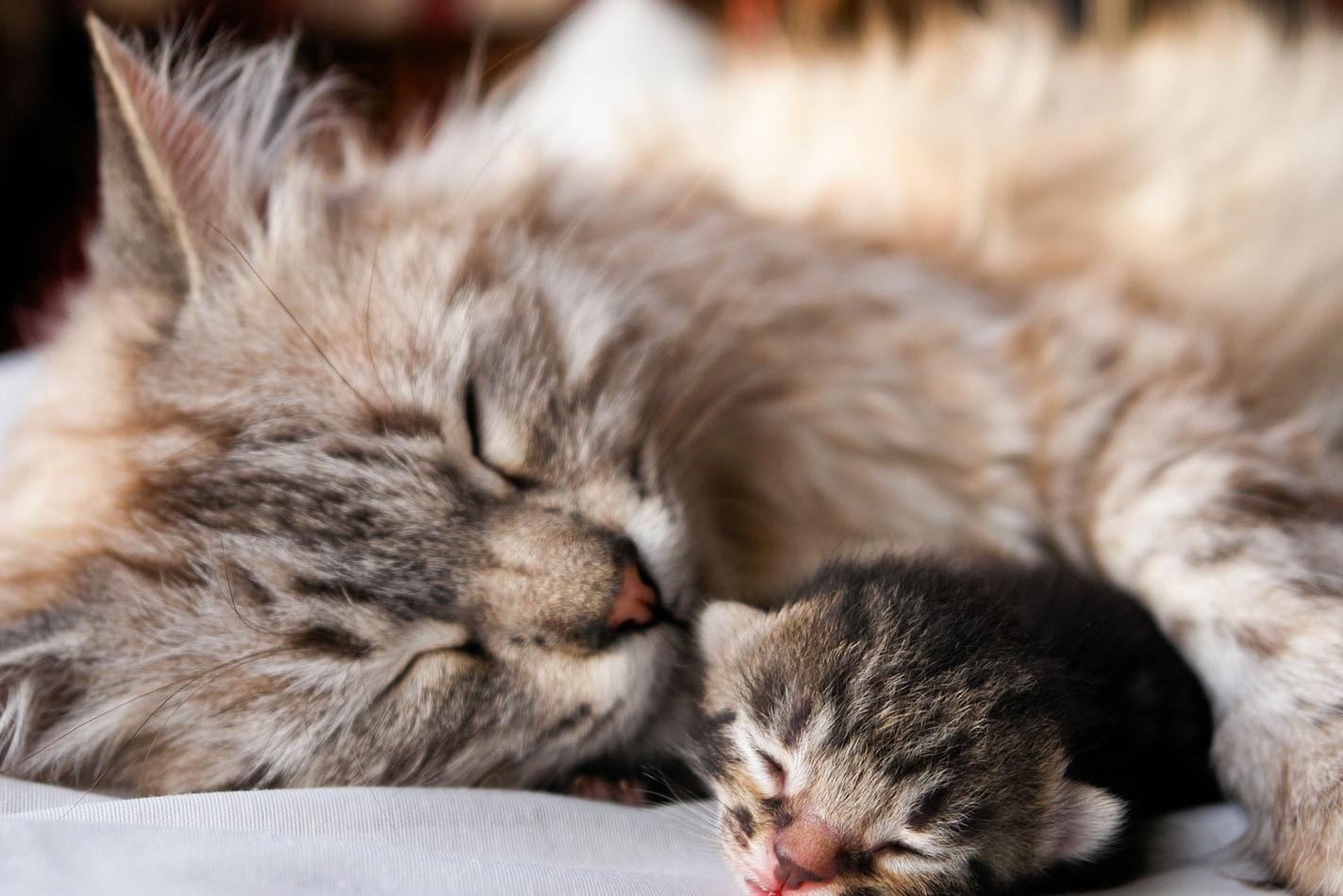 weekly kitten development timeline