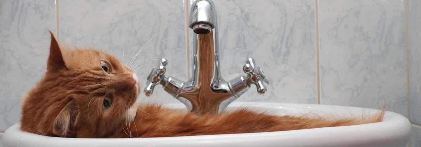 bathing a cat tools