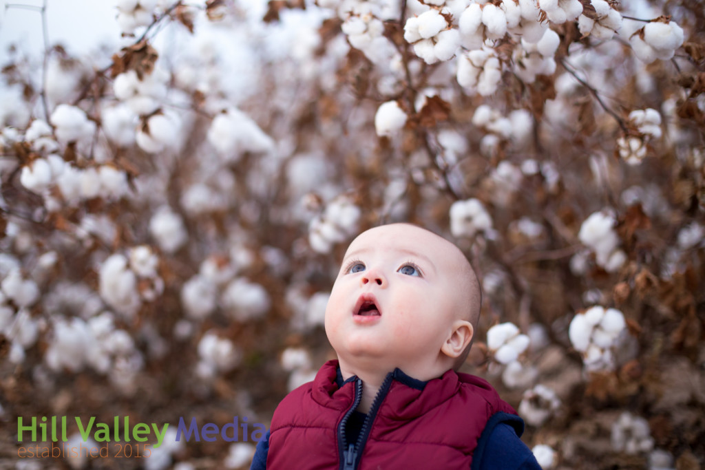 White Christmas, Cotton Fields, Baby Photos