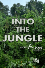 INTO THE JUNGLE - Nature Video Download