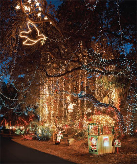 20th annual DOVE STREET FESTIVAL OF LIGHTS