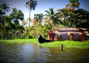 houseboats in the backwaters of kerala